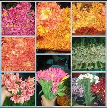 Sha Florist & Garlands Services